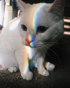 the most beautiful colors that come together on cat - your daily dose of funny cats - cute kittens - pet memes - pets in clothes - kitty breeds - sweet animal pictures - perfect photos for cat moms Kittens Cutest, Cats And Kittens, Cute Cats, Funny Cats, Kittens Meowing, Siamese Cats, Pretty Cats, Beautiful Cats, Cute Baby Animals