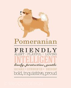 Pomeranian Dog Breed print illustration from Sirocco Design http://www.siroccodesign.co.uk/collections/dog-breed-prints/products/dog-breed-print-pomeranian