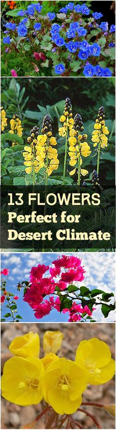 13 Flowers for the Southwest Desert