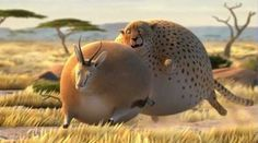 animals | What if All Animals Were Fat? | Extraordinary Intelligence
