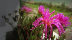 Taken outside the house in Ooty. Not sure which flower though.