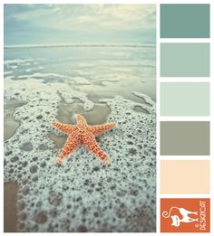 Starfish 2 - Teal Blue, Dusky, Steel, slate, grey, blush, terracotta - Designcat Colour Inspiration Pallet