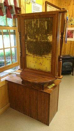 Indoor bee hive