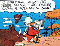 Tio Patinhas lê manual de sobrevivência, ilustração de Walt Disney.
