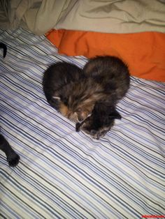 My Kittens Are Shaped Like A Heart. - http://cutecatshq.com/cats/my-kittens-are-shaped-like-a-heart/