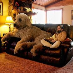 This Guy Turns His Dog Into A Giant In A Series Of Hilarious Photos 20 Photos I Can Has Cheezburger Huge Dogs Westminster Dog Show Baby Animals Funny