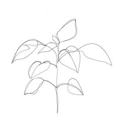 Image result for drawing plants minimalist