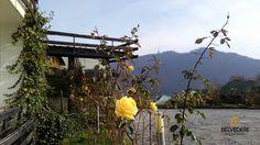 #exterior #autumn #garden #view #belvedererestaurant #outside #autumnbreeze #gorgeousview #brasov Indoor, Exterior, Pictures, Interior, Photos, Outdoor Rooms, Grimm
