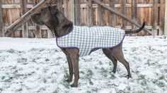 The cold weather is sneaking up on us and our tail-wagger friends are feeling cold just as we are.Providing them with a dog coat helps to keep the cold out.