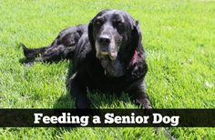Feeding a Senior Dog: Seven Functional Foods http://slimdoggy.com/feeding-a-senior-dog-seven-functional-foods/