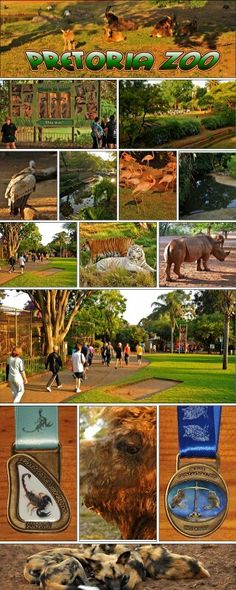 Pretoria Zoo Used to love going here when i was younger.