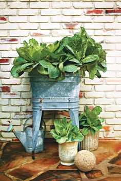 Fall Container Gardening Ideas: Fresh Decorative Collards