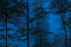 Wald und Wetter 05 – Bäume, Ebenen, Tiefe, Nebel. Die kurze Schärfe der Bilder zeigt auf einzelne Exemplare mit dem Finger. So sieht man Bäume vor lauter Wald. 2014, MD   © www.piqt.de   #PIQT
