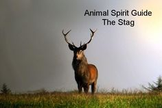 Today's Animal Spirit Guide  The Stag  If a Stag shows up, it means:  There is an opportunity to release something that no longer fits in your life so that room will be made for the new that is ready to be birthed and appear. This is a particularly intuitive time, so pay close attention to information that comes through physically.    From the Handbook  Animal Spirit Guides by, Steven D. Farmer