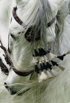 Stunning Arabian Horse in Tasseled Bridle All The Pretty Horses, Beautiful Horses, Animals Beautiful, Cute Animals, Lippizaner, Photo Animaliere, Andalusian Horse, Majestic Horse, White Horses
