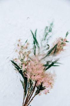 <p>Australian photographer, Lisa Sorgini, creates an ephemeral and romantic series titled 'Flotsam/Waterplants' investigating flora underwater. Known for her perceptive work, Sorgini paint