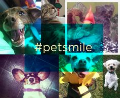 The #petsmile hashtag on Twitter made for some really cute pets!