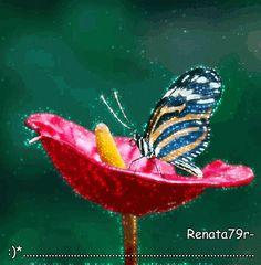 moje gify natura,przyroda,kwiaty,rośliny – Kolekcje – Google+