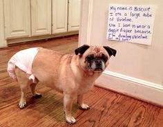 Dog shaming. ---- I have a dog. A quite loveable one at that, but dogs will be dogs. Still can't help but smile at what  they get into.  Laughing is good therapy.