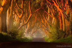 Northern Ireland- Dark Hedges by Przemysław Zdrojewski on 500px.