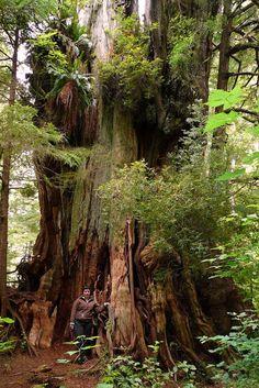 Meares Island, British Columbia