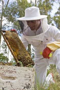 Grants for Starting an Apiary - An apiary is a place where beekeepers keep bees and beehives for the production of honey. Essentially it is a bee farm Beekeeping For Beginners, Raising Bees, Raising Goats, My Honey, Honey Bees, Golden Honey, Bee Farm, Backyard Beekeeping, Hobby Farms