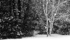 the absolute beauty of a snowstorm ... even in black and white it just sparkles