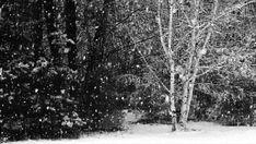 I love fresh fallen snow!