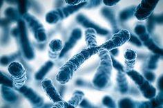 Преимплантационное генетическое тестирование | Малышева Вера Александровна