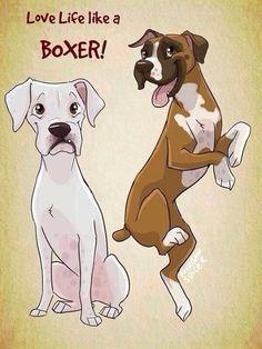 #Boxer love