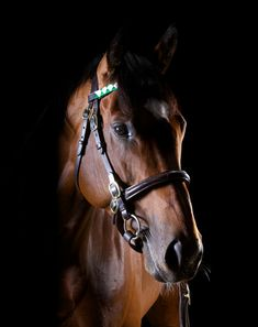 Frankel. One of the best horse in the world