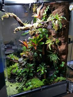 Best Snap Shots Reptile Terrarium snakes Suggestions There's no question that creating a animal brings unknown fulfillment in order to a person's life. Terrariums Gecko, Chameleon Terrarium, Gecko Terrarium, Terrarium Reptile, Aquarium Terrarium, Nature Aquarium, Tropical Terrariums, Gecko Vivarium, Aquarium Design