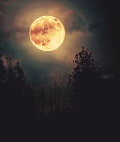 Image shared by Pretty When I Cry ♛. Find images and videos about sky, night and moon on We Heart It - the app to get lost in what you love. Stars Night, Stars And Moon, Moon Dance, Luna Moon, Shoot The Moon, Moon Pictures, Moon Photography, Moon Rise, Moon Magic