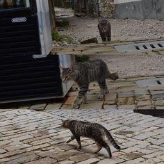 モトヴンには猫が沢山います #motovun #モトヴン #猫 #cat #fotovun