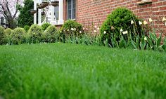 5 Tips for Water-Saving Lawn Care