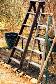 The Bumbling Gardenista: ladders for winter squash trellises