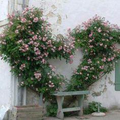 climbing Roses trained into the shape of a heart, Portes de Ré, France Dream Garden, Garden Art, Garden Design, Beautiful Roses, Beautiful Gardens, Heart In Nature, Colorful Roses, Climbing Roses, Rose Cottage
