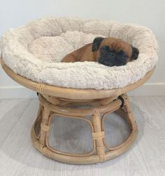 A Startling Fact About Papasan Chair Uncovered 111 Pet Furniture, Furniture Buyers, Furniture Online, Dog Rooms, Cat Room, Pet Life, Animal House, Dog Friends, Cute Dogs