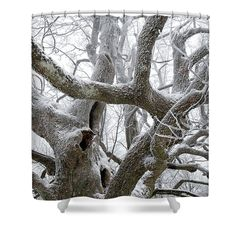 Branches of old tree. For more motives and staffs (canvas, fine art prints, pillows, mugs etc) check my website Snowy Trees, Nature Artists, Nature Artwork, Curtains For Sale, Decor Ideas, Gift Ideas, Pin Pin, Floral Pillows, Handmade Decorations