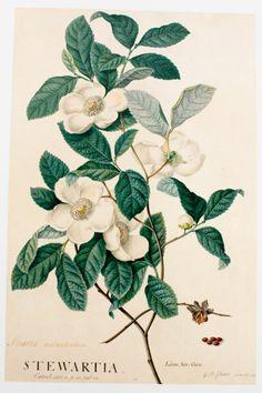 Herbarium Art