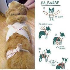 Homemade Thunder Shirt - This Simple Trick Will Help Keep Your Dog Calm During Fireworks Dog Separation Anxiety, Dog Anxiety, Anxiety Tips, Dogs With Anxiety, Anxiety Help, Dog Wrap, Old Dogs, Pet Care, Dog Training
