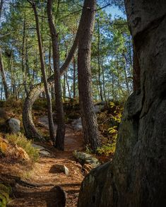 """Photographer and videographer Jeanne Lepoix has shared her incredible summer journey to Fontainbleau Forest that's """"16 kilometers, enchanted with rocks each more incongruous than the other""""."""