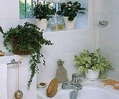 Les plantes vertes réclament de l'humidité - Dans la salle de bains