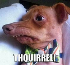 """hahaha!! """"thquirrel!"""" laughed out loud on this one."""
