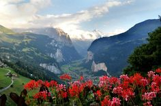 Beautiful Switzerland flowers   Wengen Switzerland with beautiful flowers and views (WengenTourism W ...