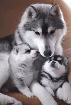 Fantastic pretty dogs detail are readily available on our site. Check it out and you wont be sorry you did. Baby Animals Super Cute, Cute Little Animals, Cute Funny Animals, Funny Dogs, Funny Humor, Baby Animals Pictures, Cute Animal Photos, Animals Images, Beautiful Dogs