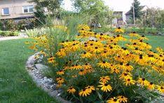 Architekt radí: Kvetoucí zahrada