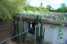 Paddle Cactus green roof by Steve Martino