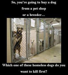 ADOPT! SAVE A LIFE! A Harsh Reality!!