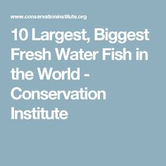 10 Largest, Biggest Fresh Water Fish in the World - Conservation Institute